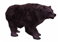 Cursed Grizzly Bear.png