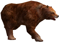 Brown Bear.png