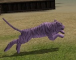 Cursed White Tiger.jpg